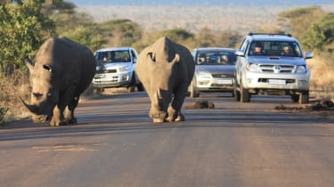 Stop for wildlife - South Africa